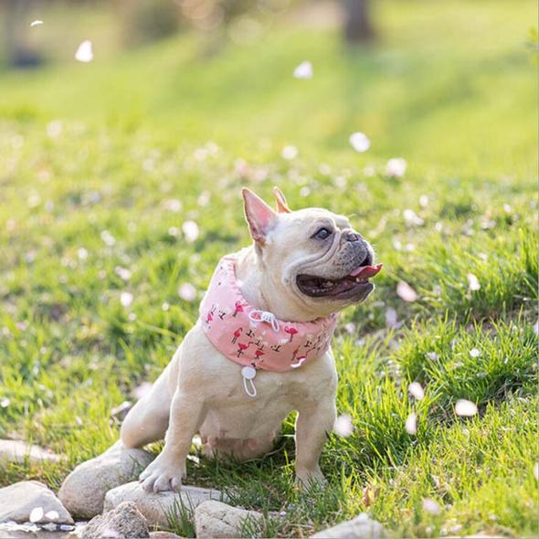 french bulldog summer cooling items