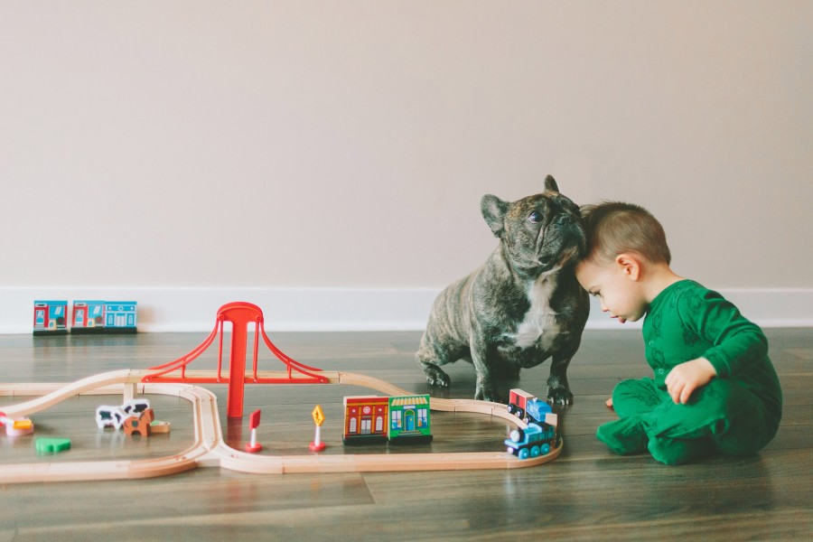 french bulldogs and kids