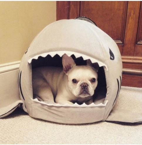best bed for a french bulldog